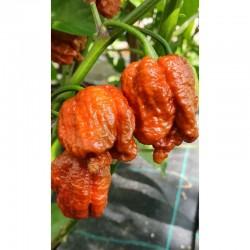 Caramel Carolina Reaper Seeds