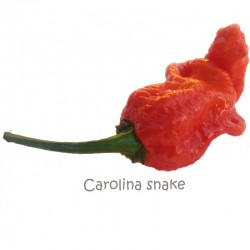 Snake Carolina Seeds