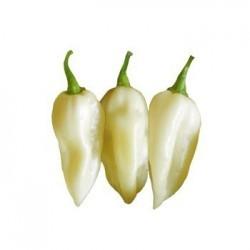 Bhut Jolokia white seeds