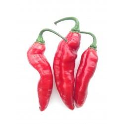 Pimenta de Neyde Red seeds